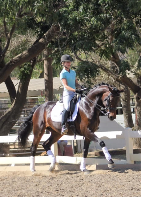 Dalana - dressage horses california