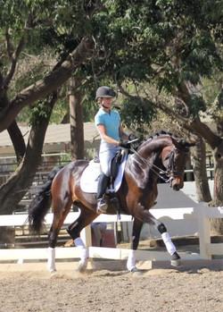 Dalana - dressage horses california