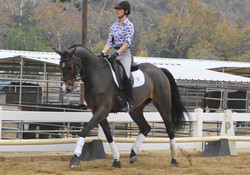 Sarah Lockman Dressage Horse Sales