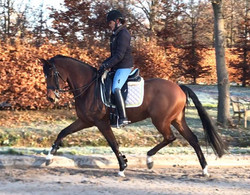 Dressage Horse Sales Orange County