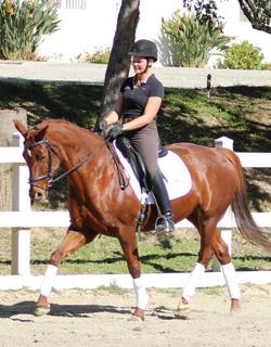 Diva - dressage horses for sale