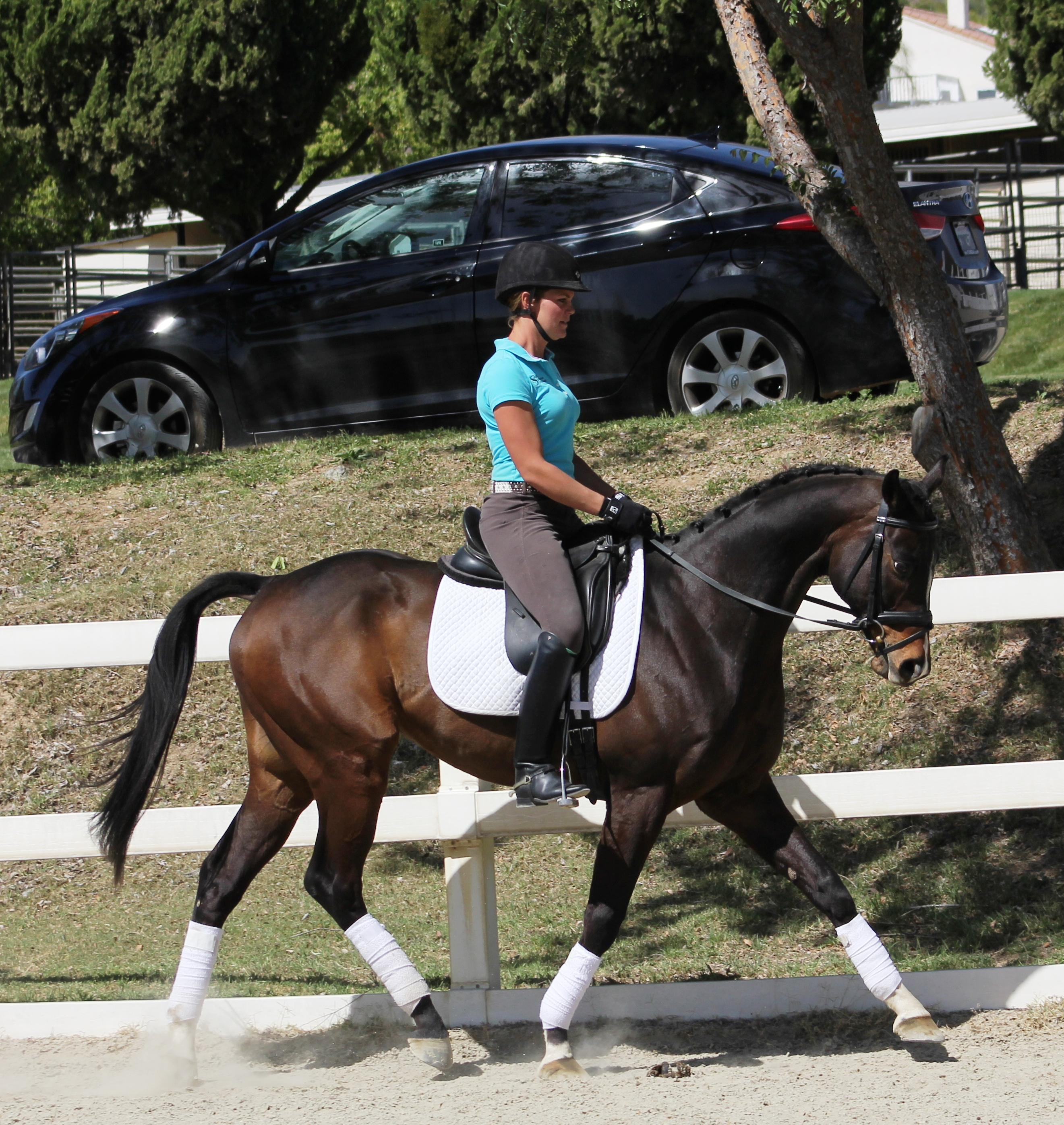 Bubbles - california dressage horses