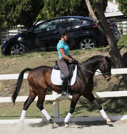 Bubbles - california dressage horses