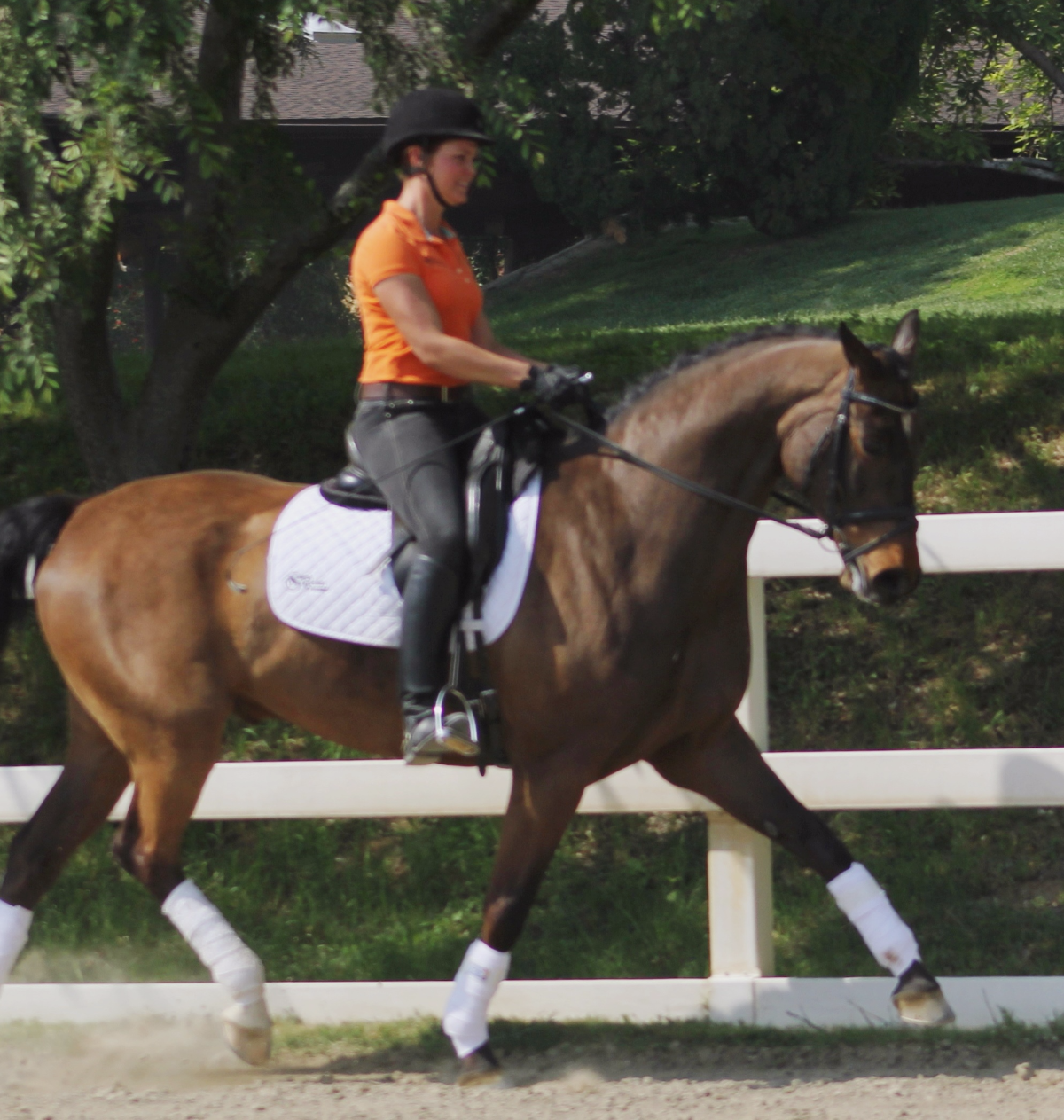 Lover Boy - california dressage