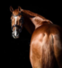 sarah lockman sale horse.jpeg