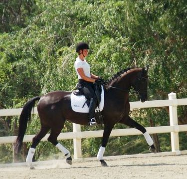 Nestle dressage horse california