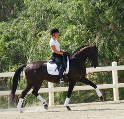 Nestle dressage horse california