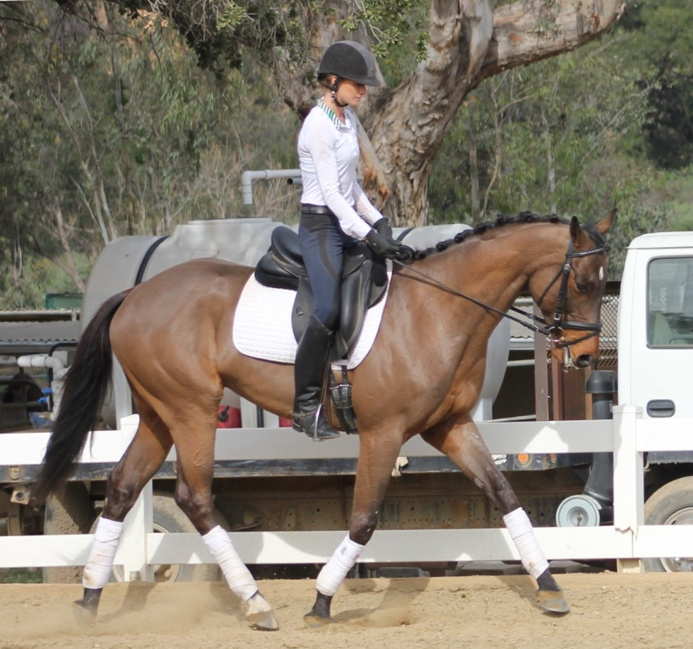 DjTrotbest - dressage horse