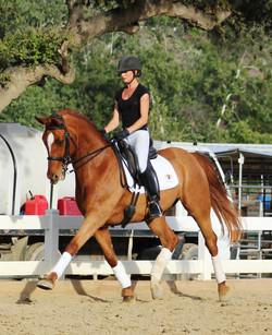 Destino Mio - dressage horses