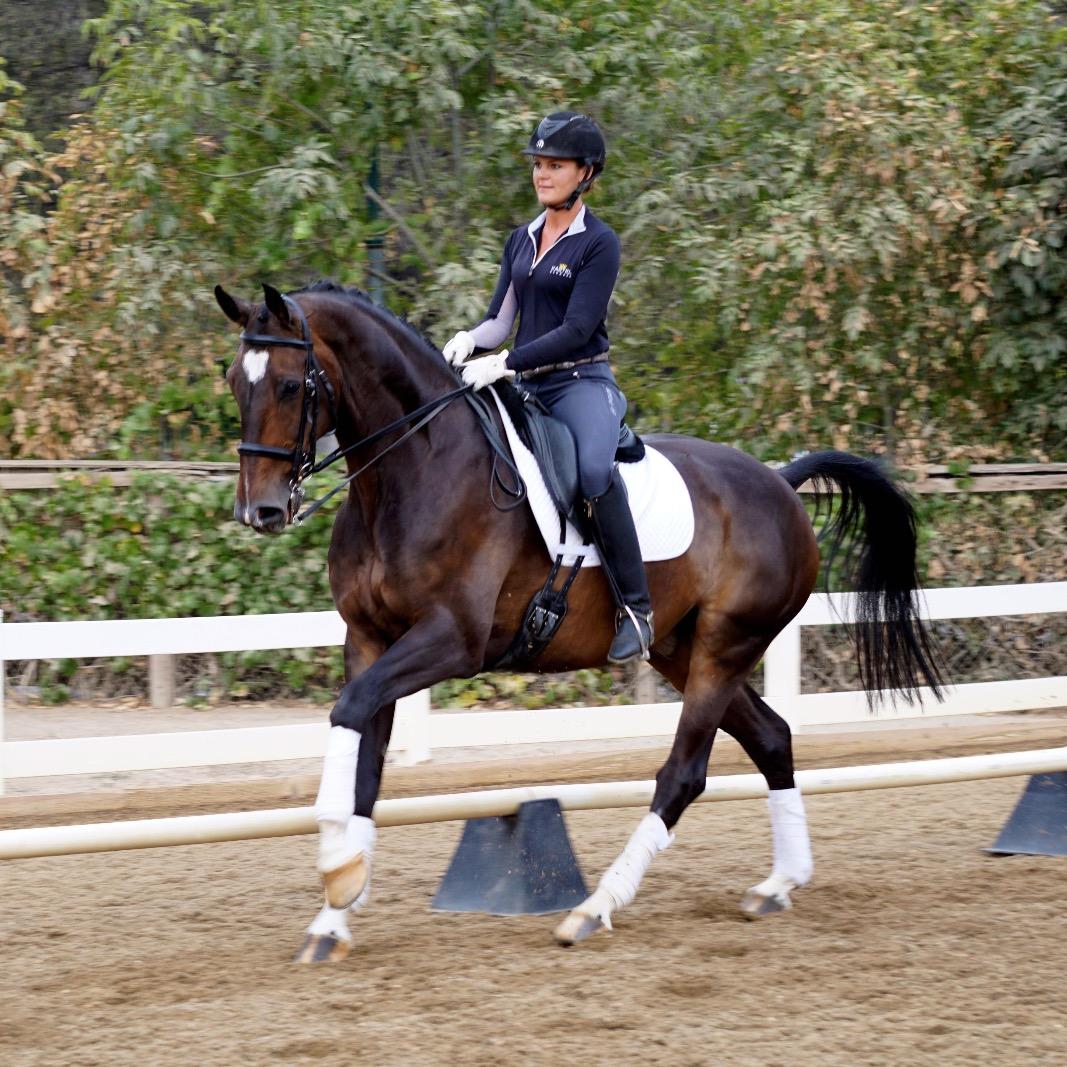 Zivemmo dressage horse sales
