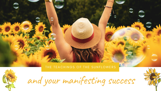 The Teachings of the Sunflowers and your Manifesting Success