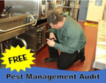 pest control, bed bugs, termites, Evansville, Terre Haute, insects, green, pet friendly, safe, child friendly, bugs, bug man, Ecology