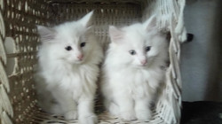 Olympe & Orchidée 2 mois