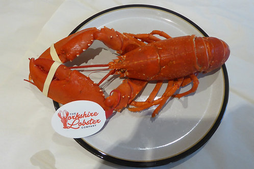 Cooked Lobster 550g - 650g