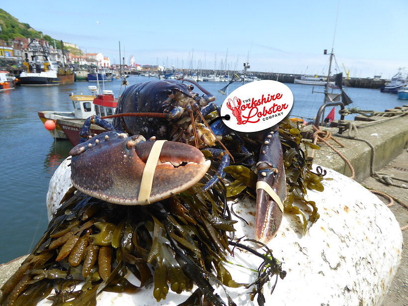 lobster and label.jpg