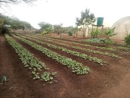 HELGA FARM INITIATIVE