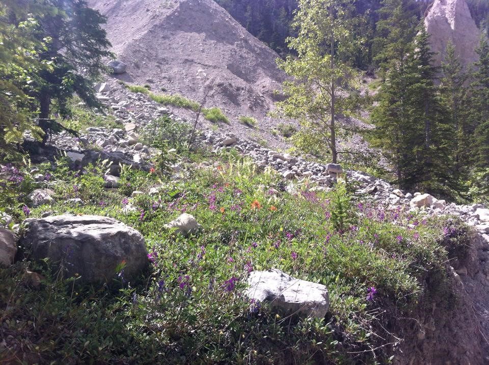 Wildflowers surrounded us as we made our way towards the cave and hoodoos