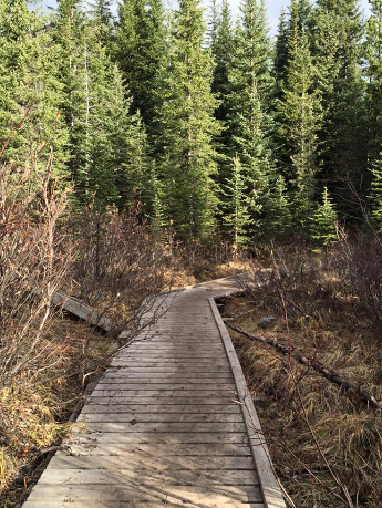 A boardwalk to get across the marshy part of the trail