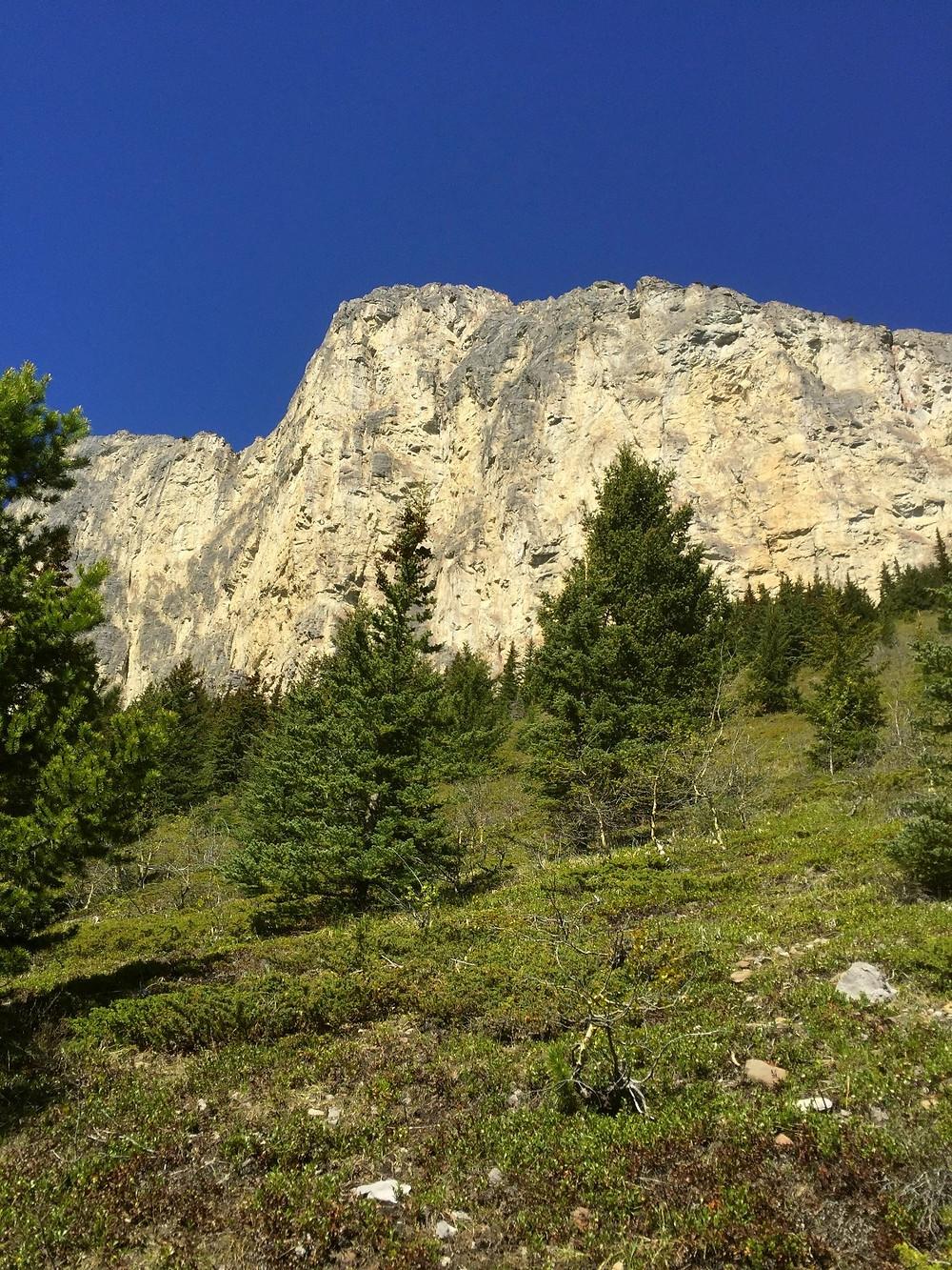 Gazing up at Mount Yamnuska