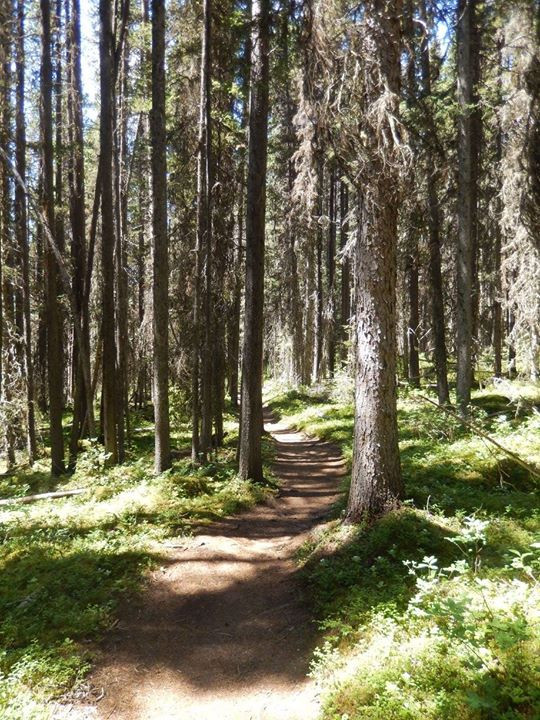 The hike to Forks was surroudned with greenery!