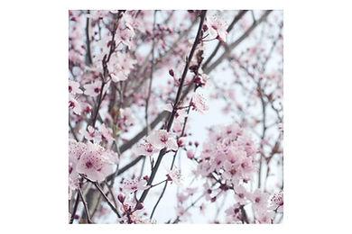 fleur de printemps photo.jpg