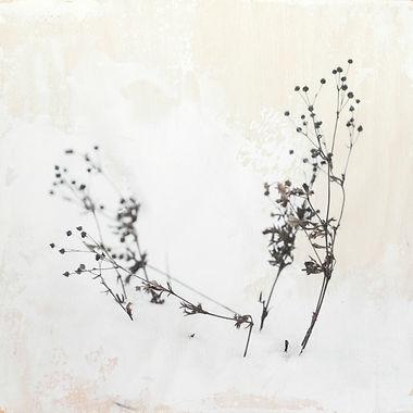 De la neige et des fleurs.jpg