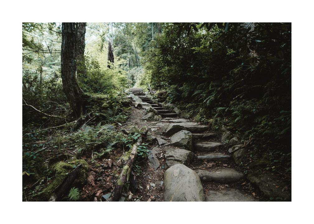 Quiet in the woods