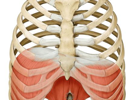 Self-help Bowen for the diaphragm