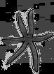 SixLeg_Starfish transparent.png