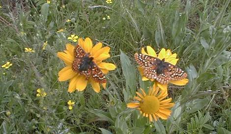 invertebrate_monarch-butterfly-Washingto