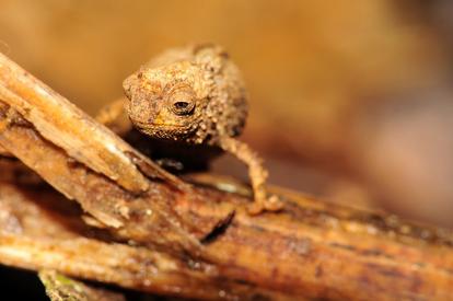 Nano Chameleon