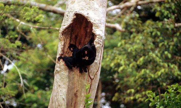 Black_spider_monkey_8.1.2012_whatwwfisdo