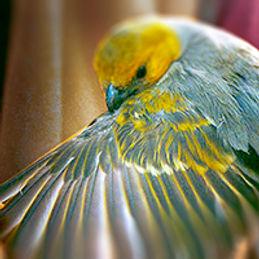 wingbars.jpg