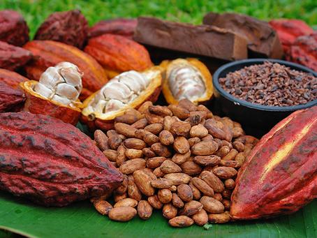 Cacao Ceremonies