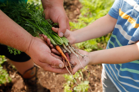 Checking on carrot growth.