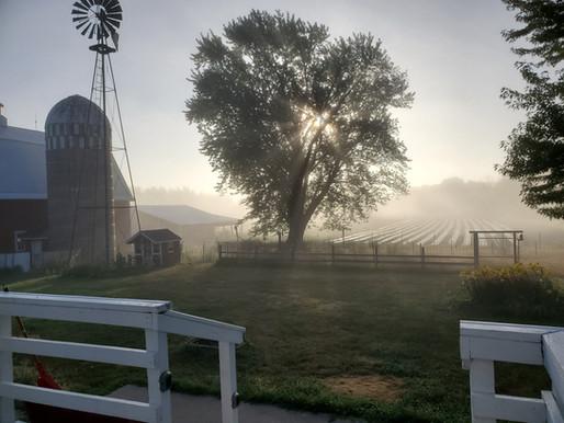 FARM NEWSLETTER // WEEK 5