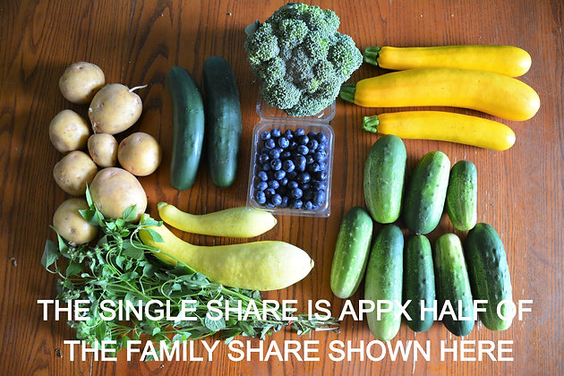 CSA Single Share