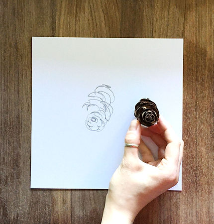 pine cone blind drawing.jpg