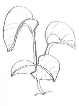 planty.jpg