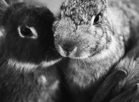 Carrots For The Bunnies
