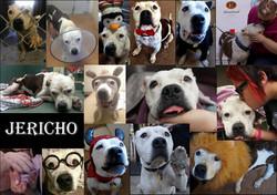 jericho collage pic.jpg