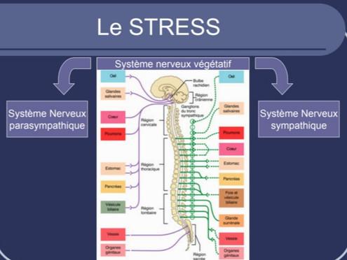 Sommes nous tous égo devant le stress ?
