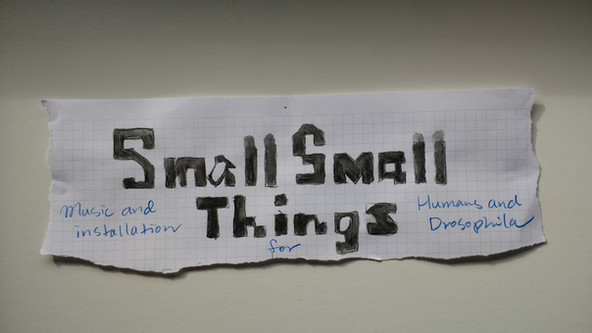 Small Small Things: music and installation for humans and drosophilae