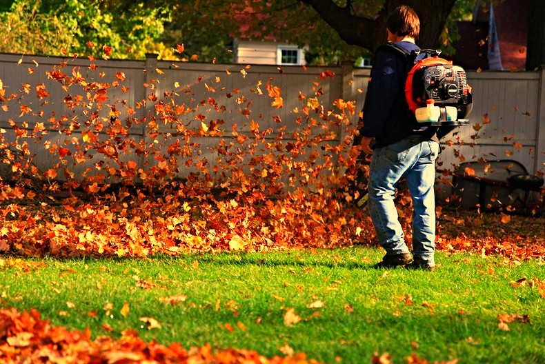 Leaf Clean-Ups