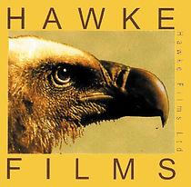 Hawk bird Image  copy.jpg