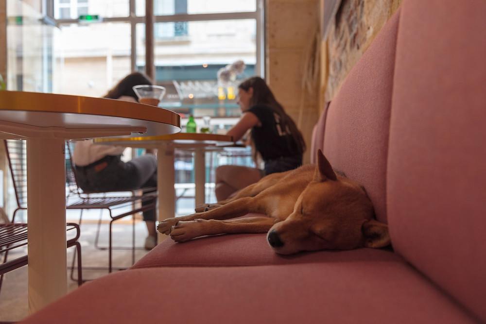 pet friendly Cafe in Korea, pet hotel in Korea