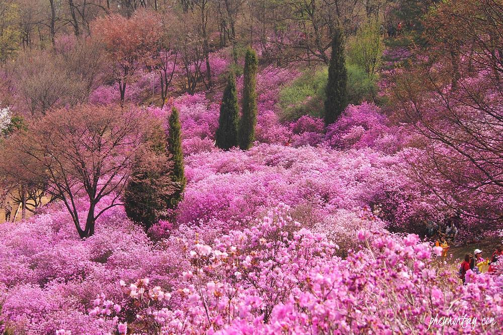 wonmi mountain in Spring