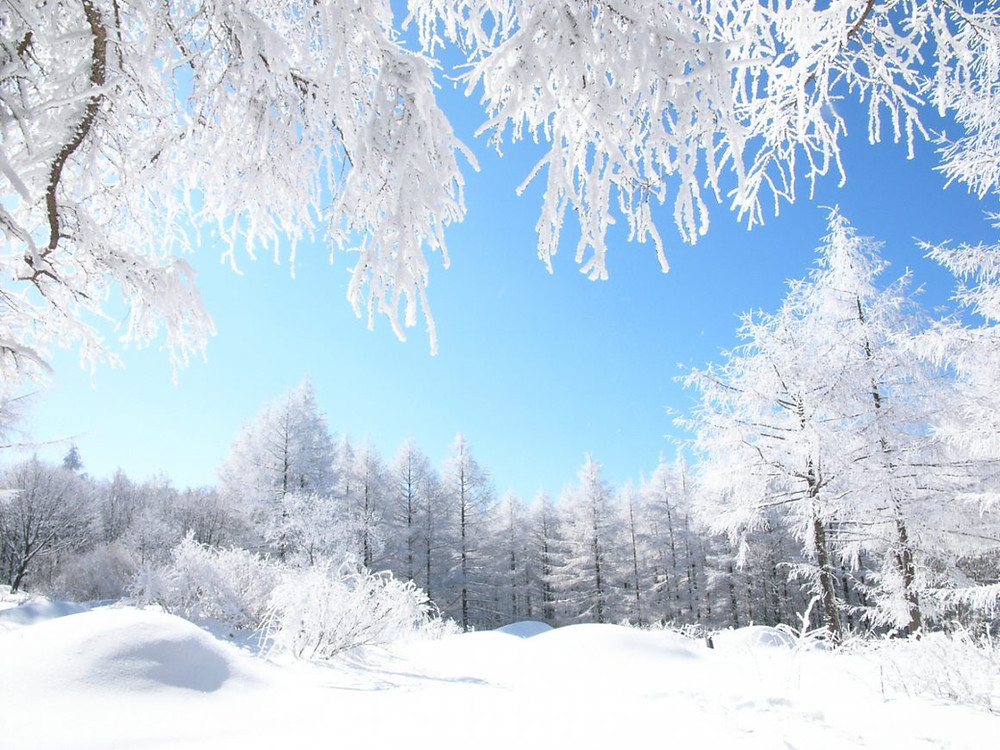 snow covered Korean landscape, forest , grass