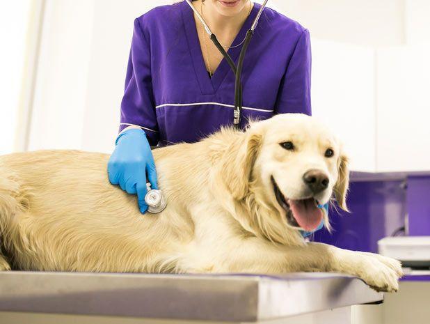 pet hospital, dog hospital or vet in Korea