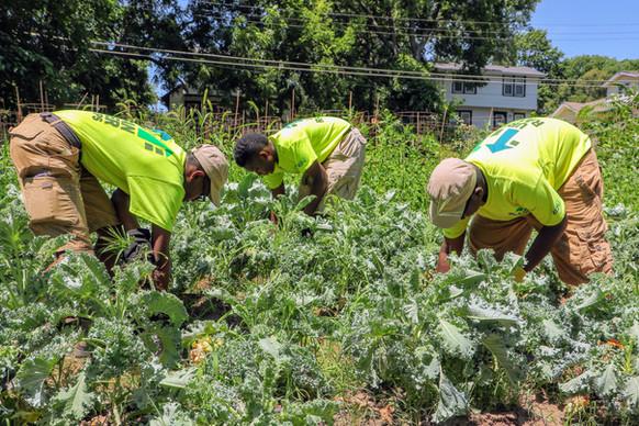 Urban Gardening & Farming